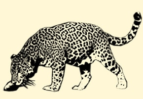 Leopardenform